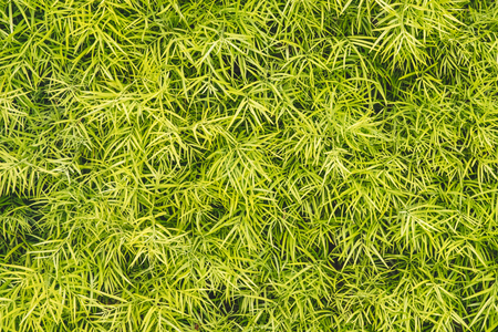 Green three fingered grass leaves wall decor