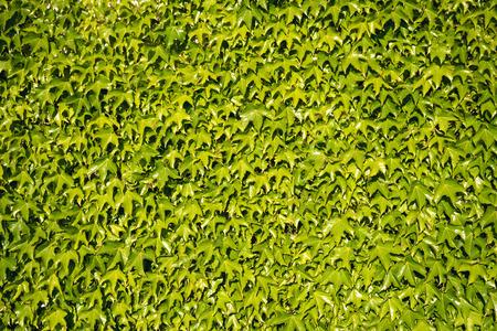 wall decor: Green three fingered grass leaves wall decor
