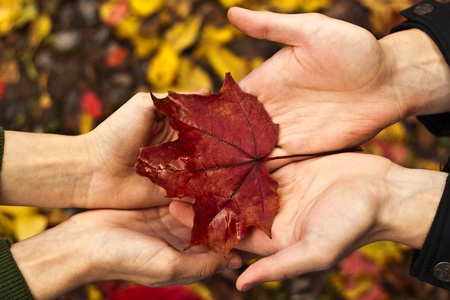 red maple leaf: Man gives a woman a red maple leaf