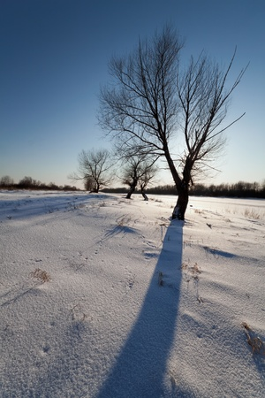 sihouette: landscape with shade tree in winter Stock Photo