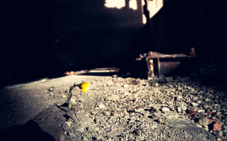 wilting: small yellow flower makes its way through the ruins Stock Photo