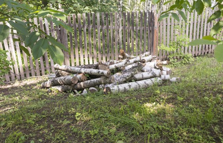 logs: birch logs lie under a wooden fence