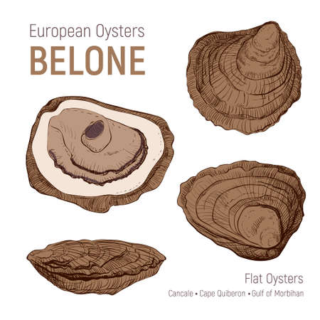 European oysters belone. Hand drawn sketch set. Seafood cuisine and dishes poster. Vector shell on white background. Vintage illustration, great design for fish restaurant, logo farm or market.