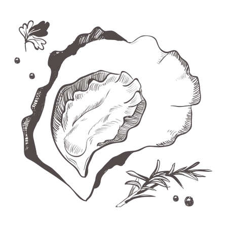 Mollusc with spices and spices. Black and white illustration of oyster isolated on a white background. Vector graphics of shellfish. Çizim