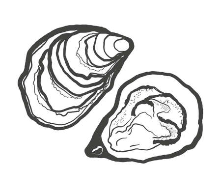 Black and white illustration of oysters isolated on a white background. Vector graphics of shellfish. Çizim