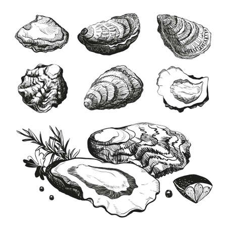 Hand drawn sketch oyster set. Seafood cuisine and dishes poster. Vector illustration oyster shell on white background.