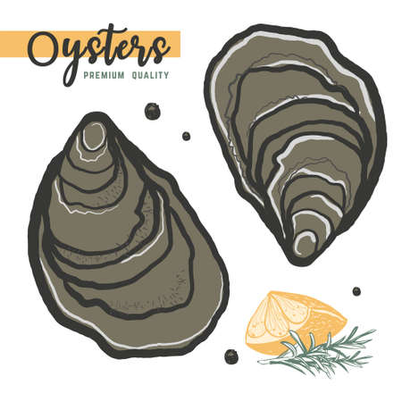 Hand drawn oysters isolated, white background. Vintage oyster shell illustration, great design for any purposes. Gourmet food. Vector icon. Linear sketch for restaurant and cafe menu. Illustration