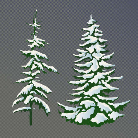 Realistic vector illustration of a spruce tree in the snow on a transparent background. Green fluffy pine isolated on a white background. Winter snow-covered trees. Elements for the Christmas scene.