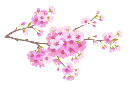 Sakura is a symbol of love on a white background.Blooming branch of Japanese cherry. Design for any purpose. Realistic illustration. A romantic concept for a mothers day gift. Retro style.