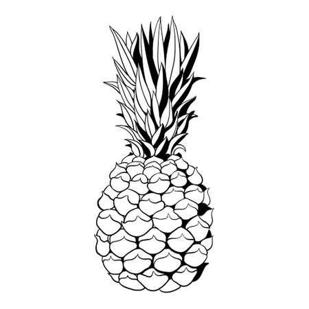 Sketch of a tropical pineapple on a white background. Summer vector drawing. Vettoriali