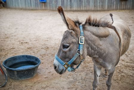 a lone donkey at the Zoo
