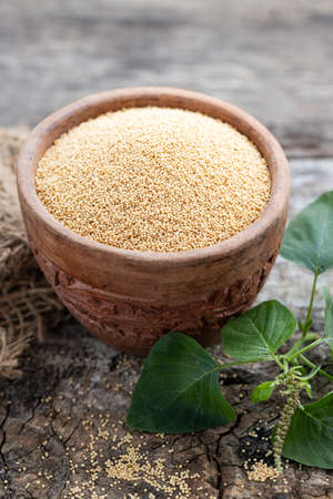 Raw Organic Amaranth Grain in a Bowl witn Amaranth plant on Rustic wooden background. Healthy colorful gluten free food concept. Stock Photo