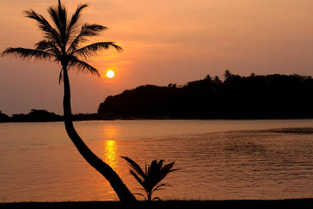 Landscape with a palm tree in Sri Lanka photo