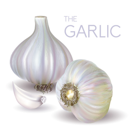 garlic clove: garlic bulb and slice isolated on white background. Vector illustration.