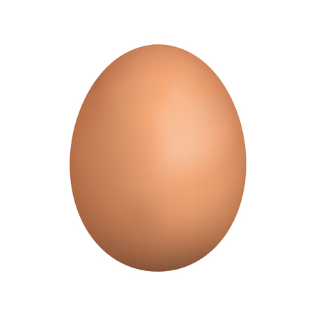brown egg: vector realistic brown egg. Isolated egg on white background. Illustration