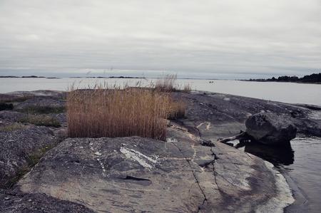weatherworn: Hardy marine grasses growing on weatherworn smooth rocks in a coastal environment