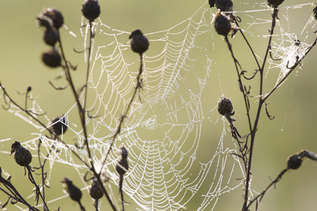 The spider web cobweb in the meadow Stock Photo