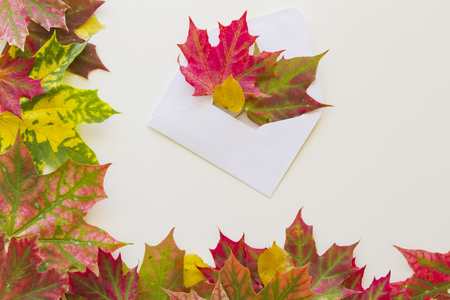 Open white envelop and colourful autumn leaves on white background. Autumn concept. Copy space for text Stock Photo