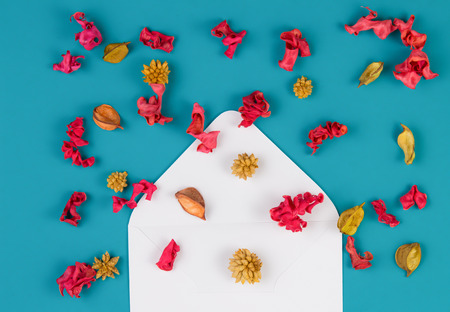Open white envelop and colorful dried flowers, plants on blue background. Top view, flat lay Stock Photo