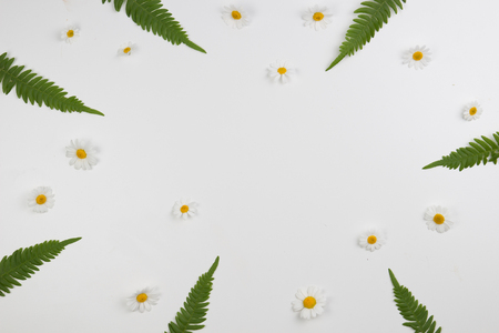 chamomile flower: Flower frame of meadow daisies and green leaves on white background. Flat lay, top view