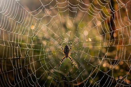 Spider in the middle of the spider web