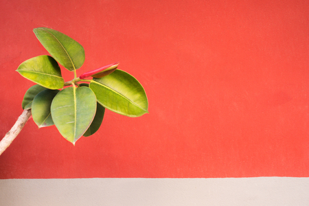 Branch with green leaves on the red wall background
