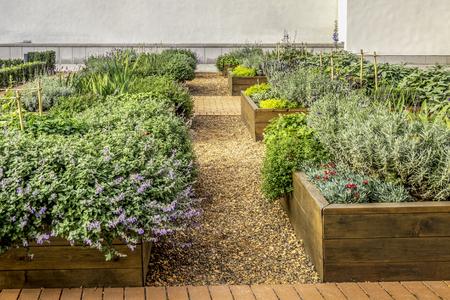 Geplunderde bedden in een stadstuin met planten, kruiden, kruiden en groenten Stockfoto