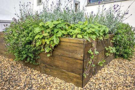 Überfallene Beete in einem städtischen Garten, der Pflanzen Kräuter Gewürze Beeren und Gemüse anbaut Standard-Bild