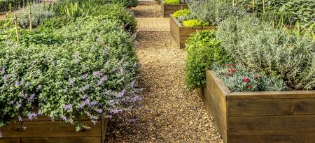 Überfallene Betten in einem städtischen Garten, der Pflanzenkräuter, Gewürze und Gemüse anbaut.