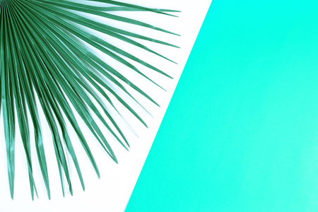 Tropical palm leaf with multicolored background