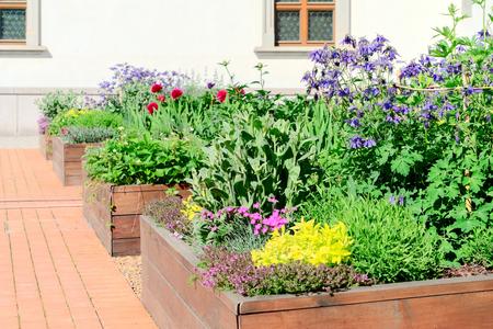 Letti rialzati in un giardino urbano che coltivano piante fiori, erbe spezie e bacche Archivio Fotografico