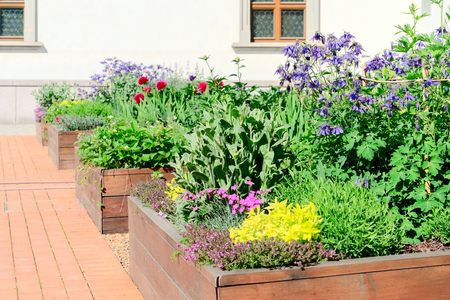 Raised beds in an urban garden growing plants flowers, herbs spices and berries 免版税图像