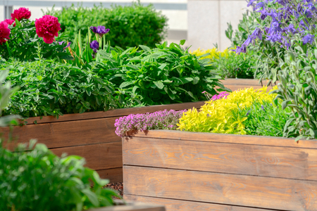 Verhoogde bedden in een stadstuin met planten, kruiden, kruiden en groenten