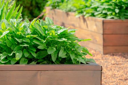 Hochbeete in einem städtischen Garten, der Pflanzen Kräuter Gewürze und Gemüse anbaut Standard-Bild