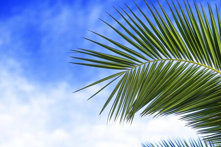 Part of green palm leave on a blue sky background. Stockfoto