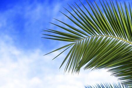 Part of green palm leave on a blue sky background. Reklamní fotografie