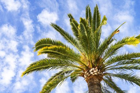 Beautiful green palm on a blue sky background