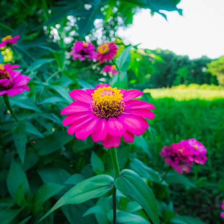 Freshness of flowers 스톡 콘텐츠