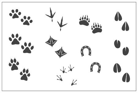 Animali footprints- zampa del gatto, zampa di cane, orso zampa, zampe di gallina uccelli-, piedi d'anatra, a ferro di cavallo, Artiodactyls hoofs- piedi cervi, antilopi, pecore, giraffe, capra, mucca, Lama, alci, rana. Illustrazione vettoriale isolato