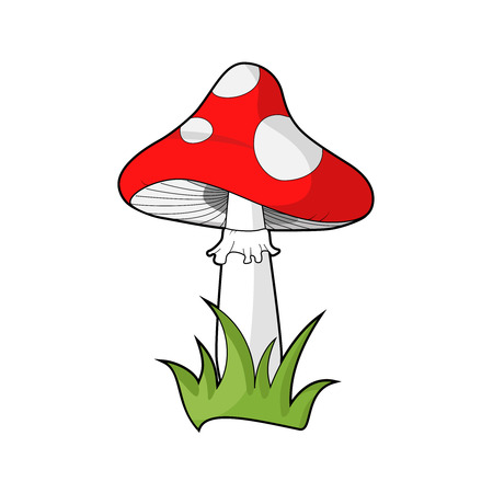 amanita: Poisonous red dotted mushroom, known as amanita muscaria or fly agaric or toadstool. Vecor. Isolated on white. Illustration. Illustration