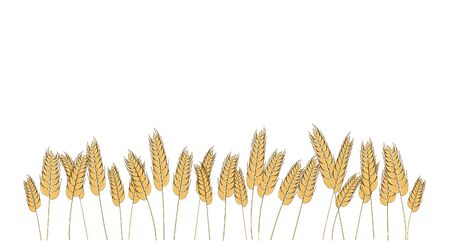 Wheat barley rye oat field. Vector bread cereal grain. Isolated illustration. Graphic frame page template