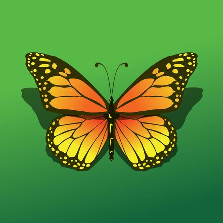 solated butterfly alight at green background with shadow beautifull realistic simple icon illustration