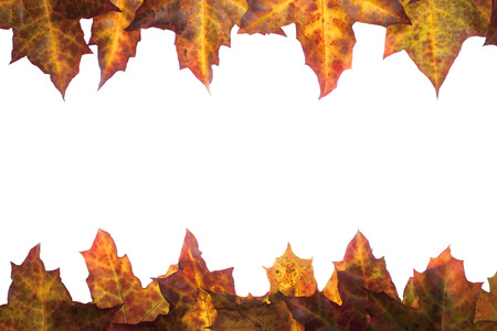 Frame of fallen colorful leaves with place for your text - Photo taken 05. november 2014
