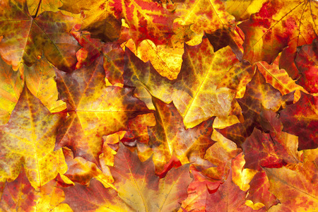 background of colorful fallen leaves on the ground. Photo taken 5. november 2014