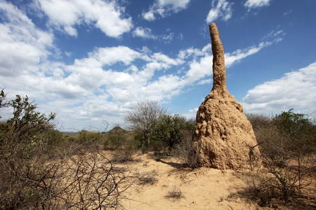 Termite mound in Africa - South Ethiopia