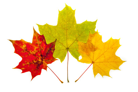 Three leaves of different colors - Photo taken 10. November 2014