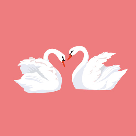 swans: Love of two swans