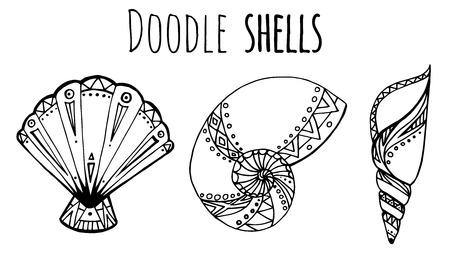 seashell: Set of black and white Doodle illustration of seashell for your creativity