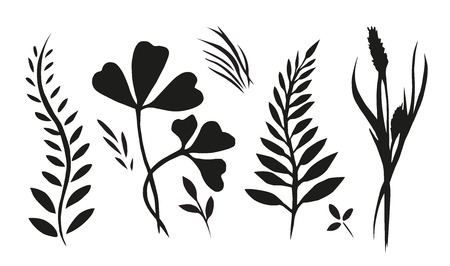 grasses: Set with plants, herbs and grasses painted ink for your creativity