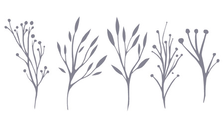 delicate: Vector set of delicate leaves and herbs for your creativity